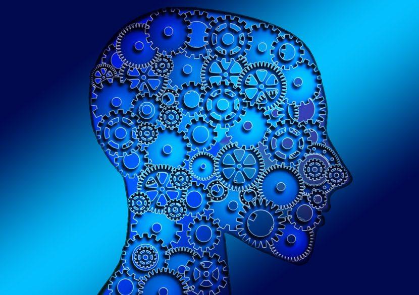 Human Meta Cognition