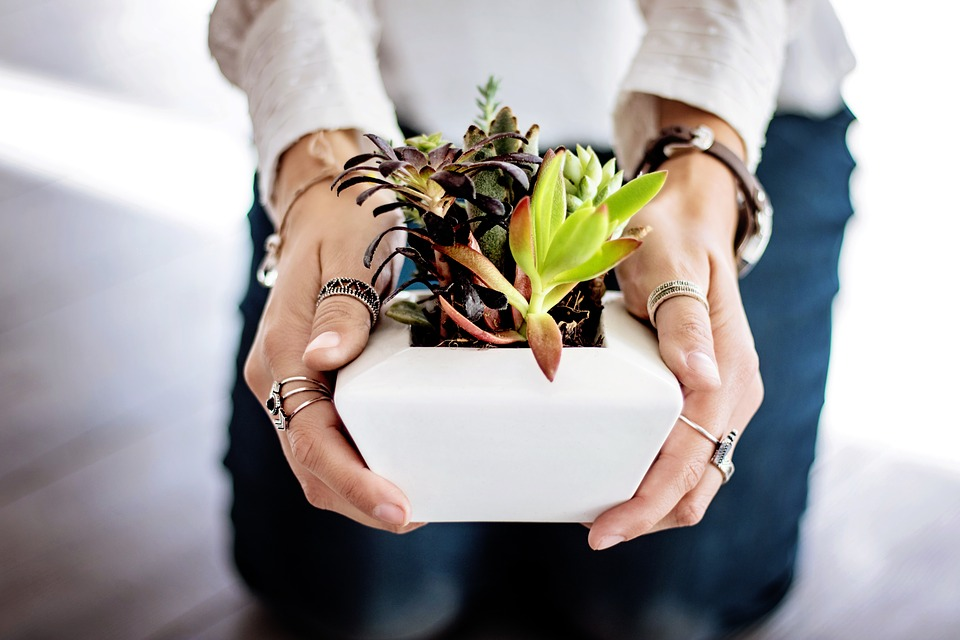 House Plants Reduce Stress Within Body